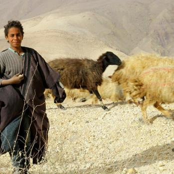 Boy shepherd #2.