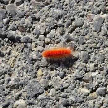 Strange radioactive bugs are everywhere.