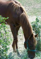 2d783-photoride_sept2007_horse