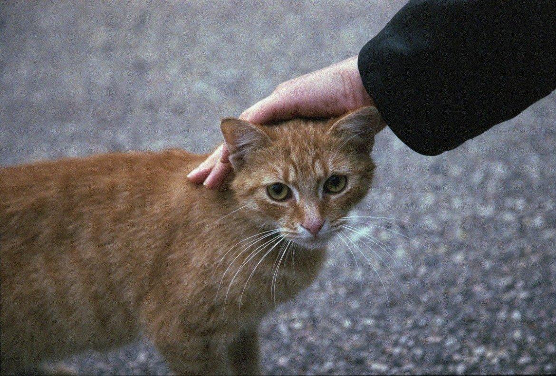 cat affection