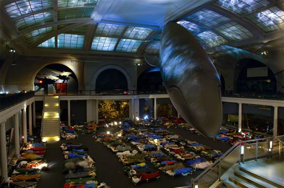 sleepover in whale room, museum of natural history