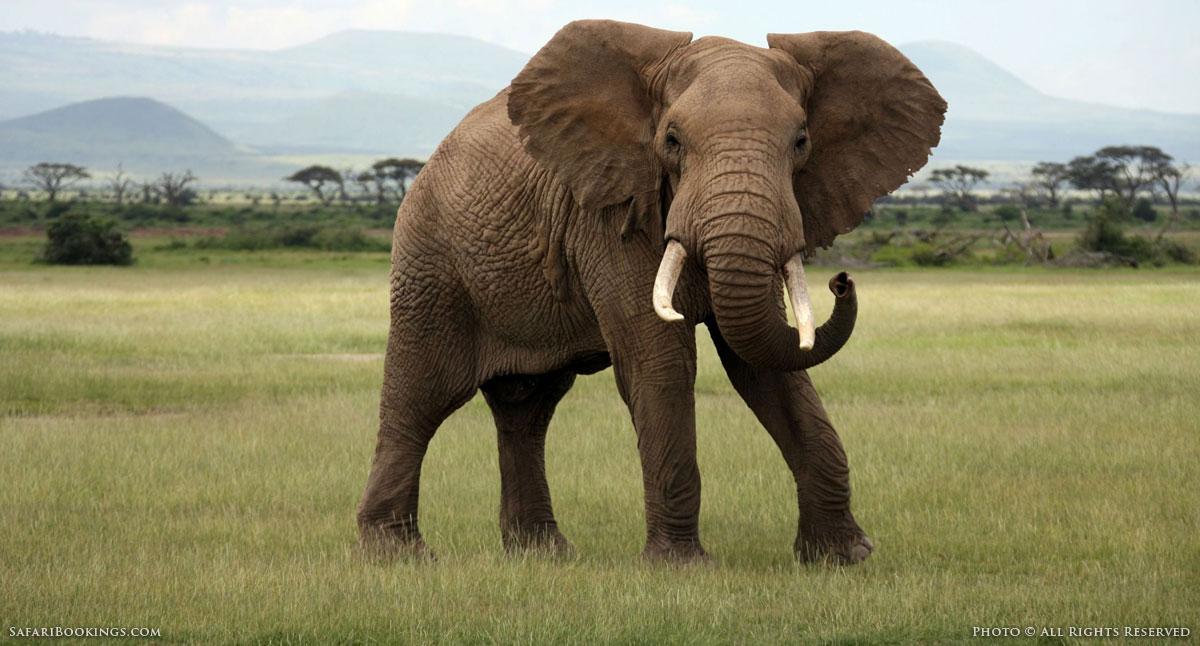 Are You Acting Like an Adult Elephant? | NoBSCoachingAdvice.com