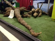 yuka root