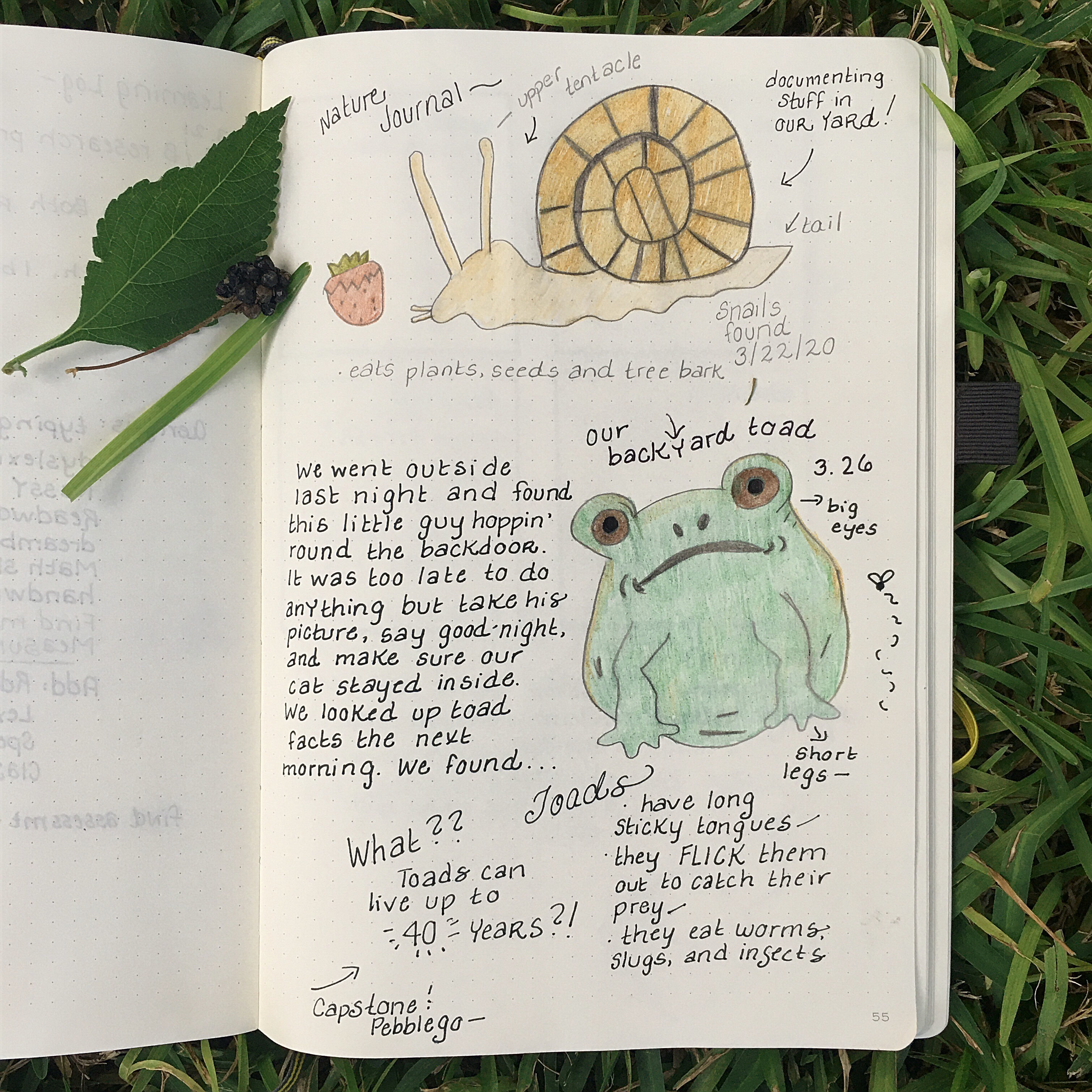 Journal The Big Green Bookshelf