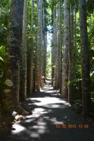 Kauri Ave