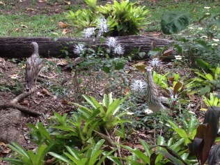 A couple of Curlews! So cute.