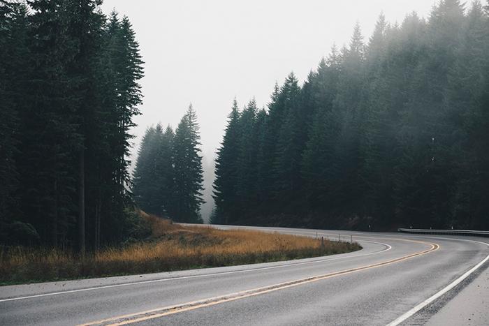 street foggy forest