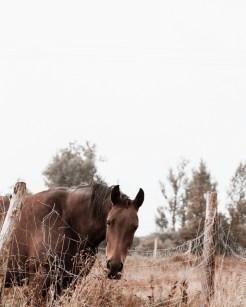 brown horse in autumn