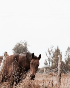 brown horse in autumn
