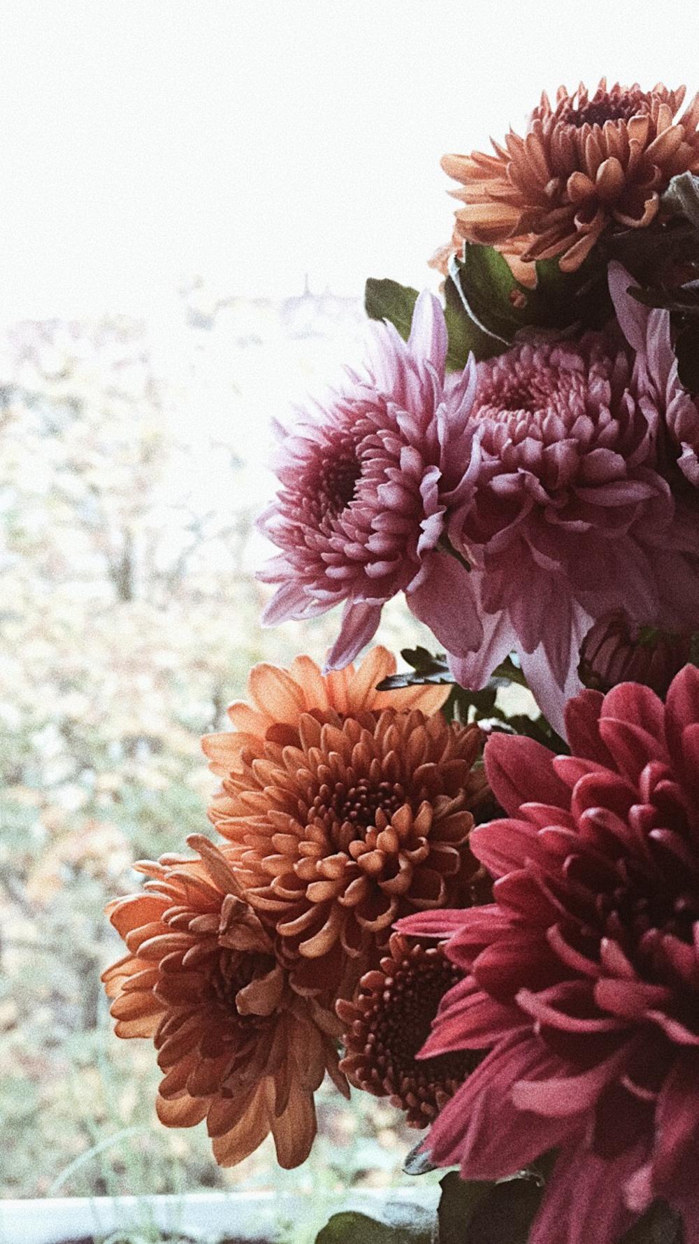 Autumn chrysanthemum