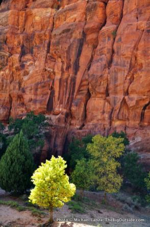 Along the Hop Valley Trail in Zion National Park.
