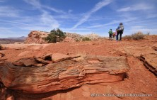 Navajo Knobs Trail.