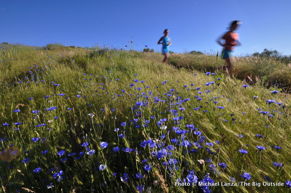 Runners and wildflowers in the Boise Foothills.