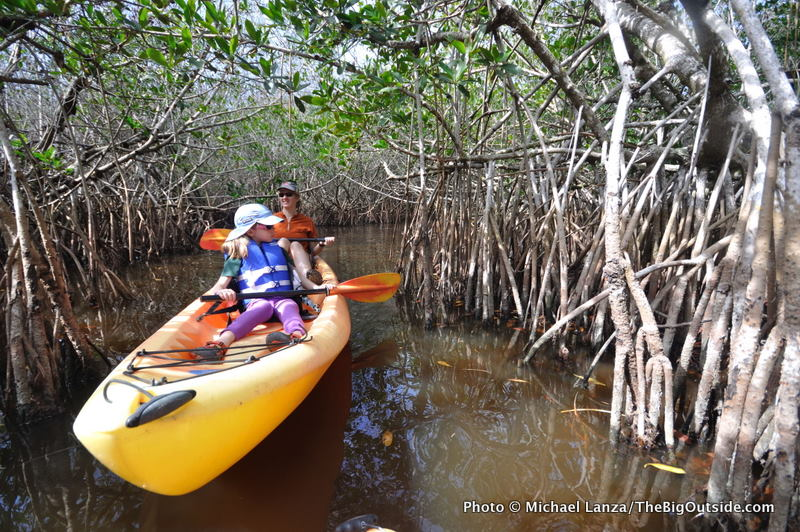 Kayaking the mangrove tunnels on the East River.