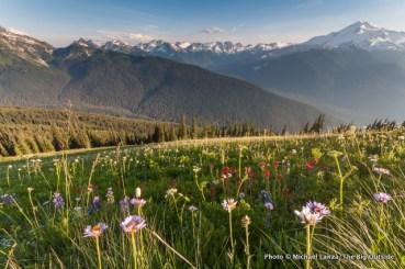 Along the trail to Image Lake, Glacier Peak Wilderness, Washington.