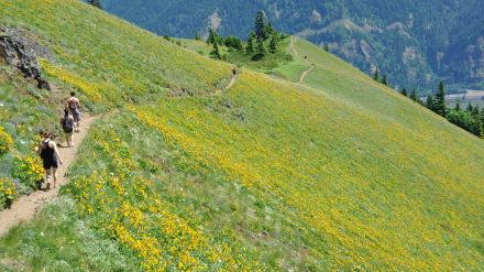 Photo Gallery: My Best Wildflower Pictures