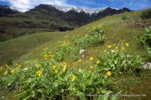 Along the High Trail, Hells Canyon