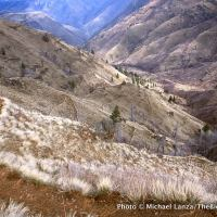 Saddle Creek Trail, Hells Canyon, Oregon.