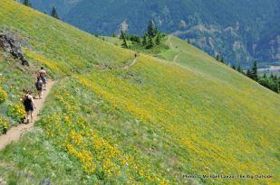 Dog Mountain Trail, Columbia Gorge.