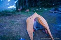 Deer at campsite, Upper Lyman Lakes.