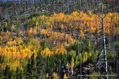 Aspens in Wild Basin.