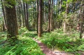 Horsetail Creek Trail, Columbia Gorge.