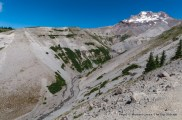 Above Zigzag Canyon, Timberline Trail.