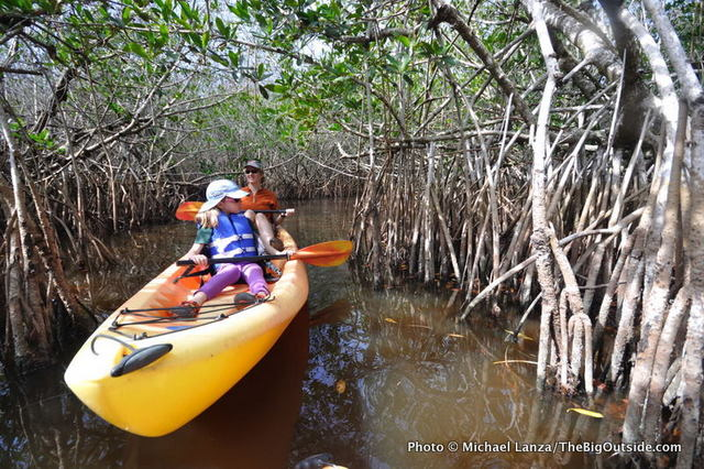 Kayaking mangrove tunnels, East River, on the outskirts of Everglades National Park.
