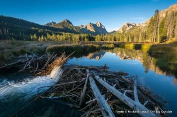 Beaver dam in Fishhook Creek Valley, Sawtooth Mountains, Idaho.