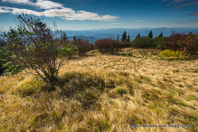 Andrews Bald, Great Smoky Mountains National Park.