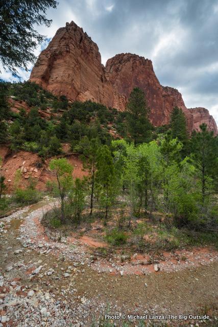 Taylor Creek Trail.