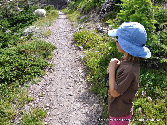 A young girl watches a mountain goat while hiking the Gunsight Pass Trail, Glacier National Park.