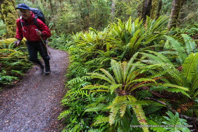 Hiking the Kepler Track, Fiordland National Park, New Zealand.