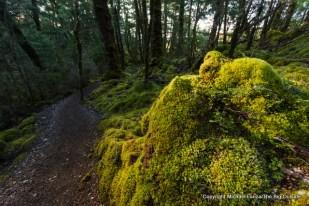Along the Kepler Track, Iris Burn Valley, Fiordland National Park.