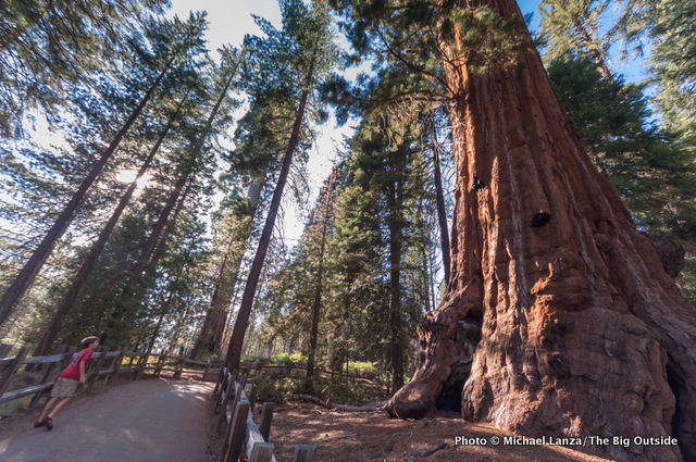 The Grant Grove of giant sequoias in Kings Canyon National Park.