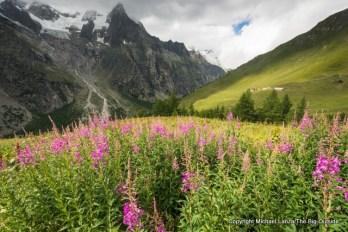 Wildflowers outside Refugio Bonatti, Tour du Mont Blanc, Italy.