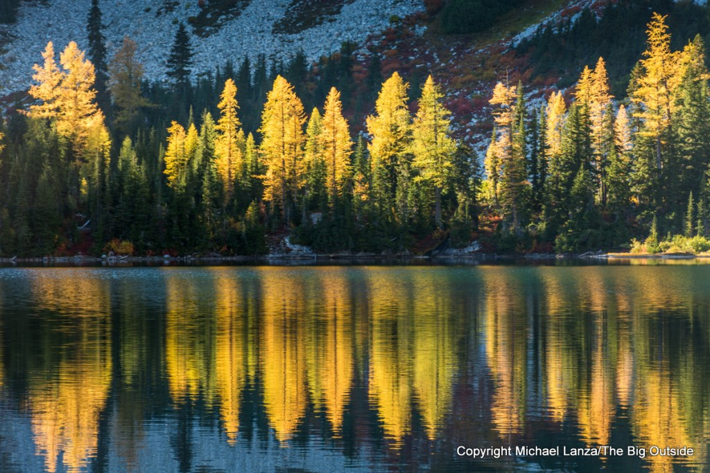 Larch trees glowing with fall color, reflected in Rainbow Lake in the North Cascades National Park Complex.