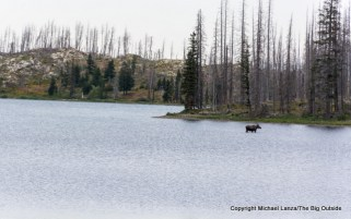 A moose in Red Eagle Lake in Glacier National Park.
