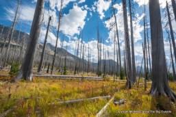 Forest burn along Red Eagle Creek, Glacier National Park.