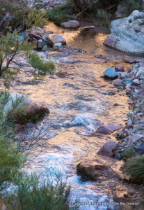 Bright Angel Creek, along the North Kaibab Trail in the Grand Canyon.