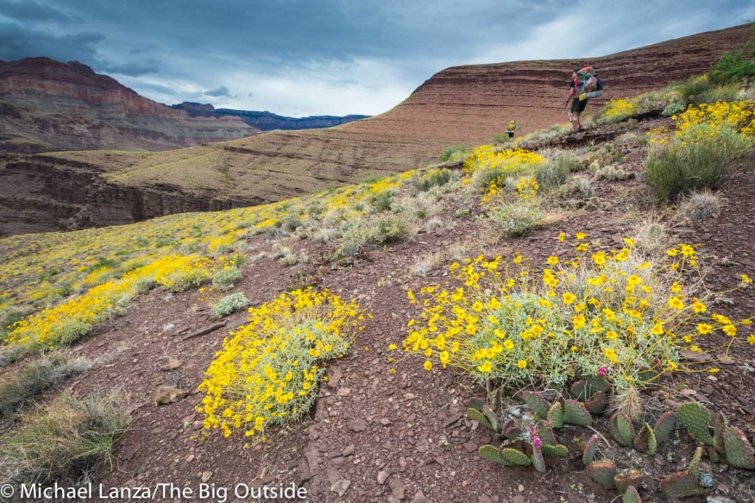 Backpackers and wildflowers along the Grand Canyon's Escalante Route.