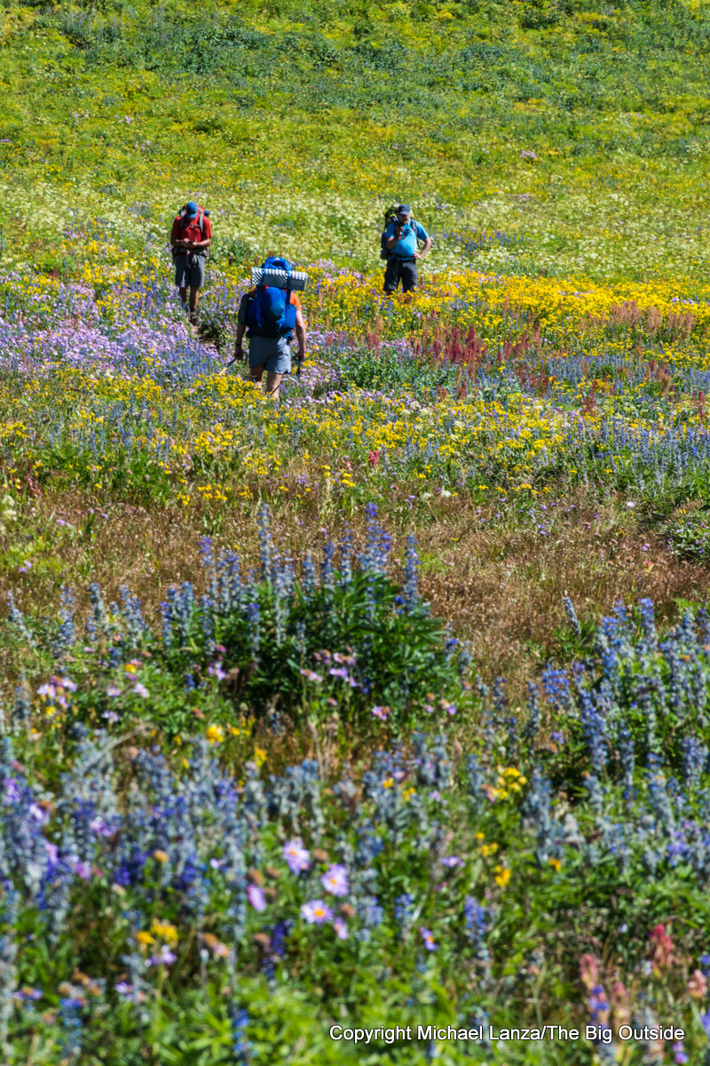 Backpackers and wildflowers on the Teton Crest Trail, Grand Teton National Park.