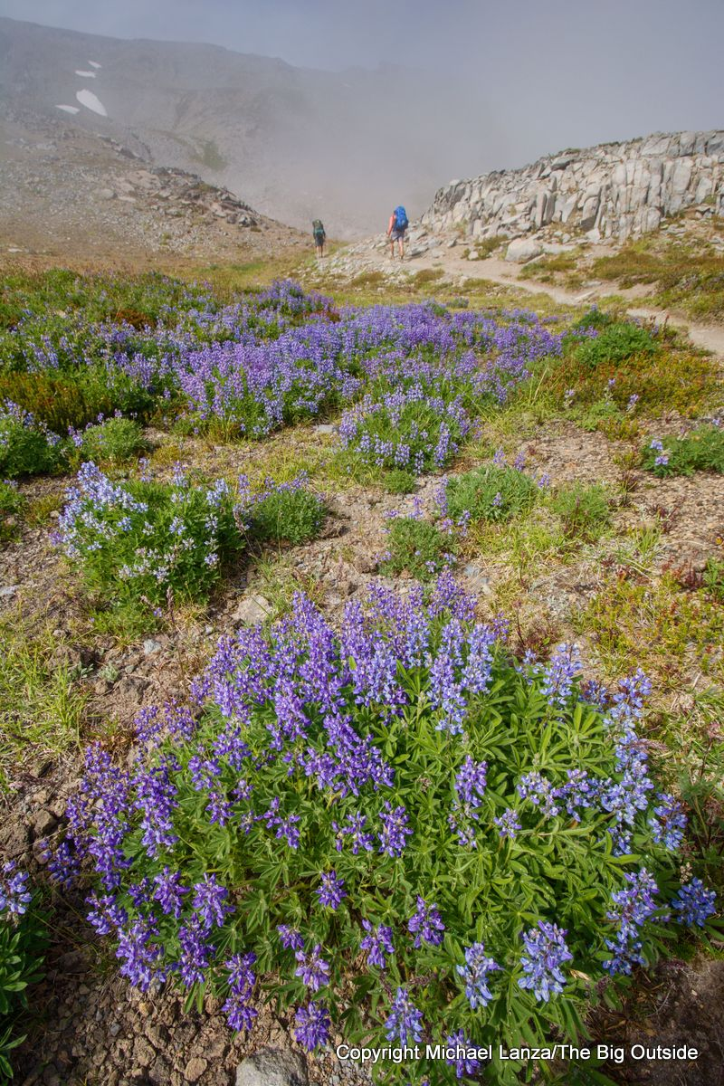 Backpackers and lupine on the Wonderland Trail, Mount Rainier National Park.