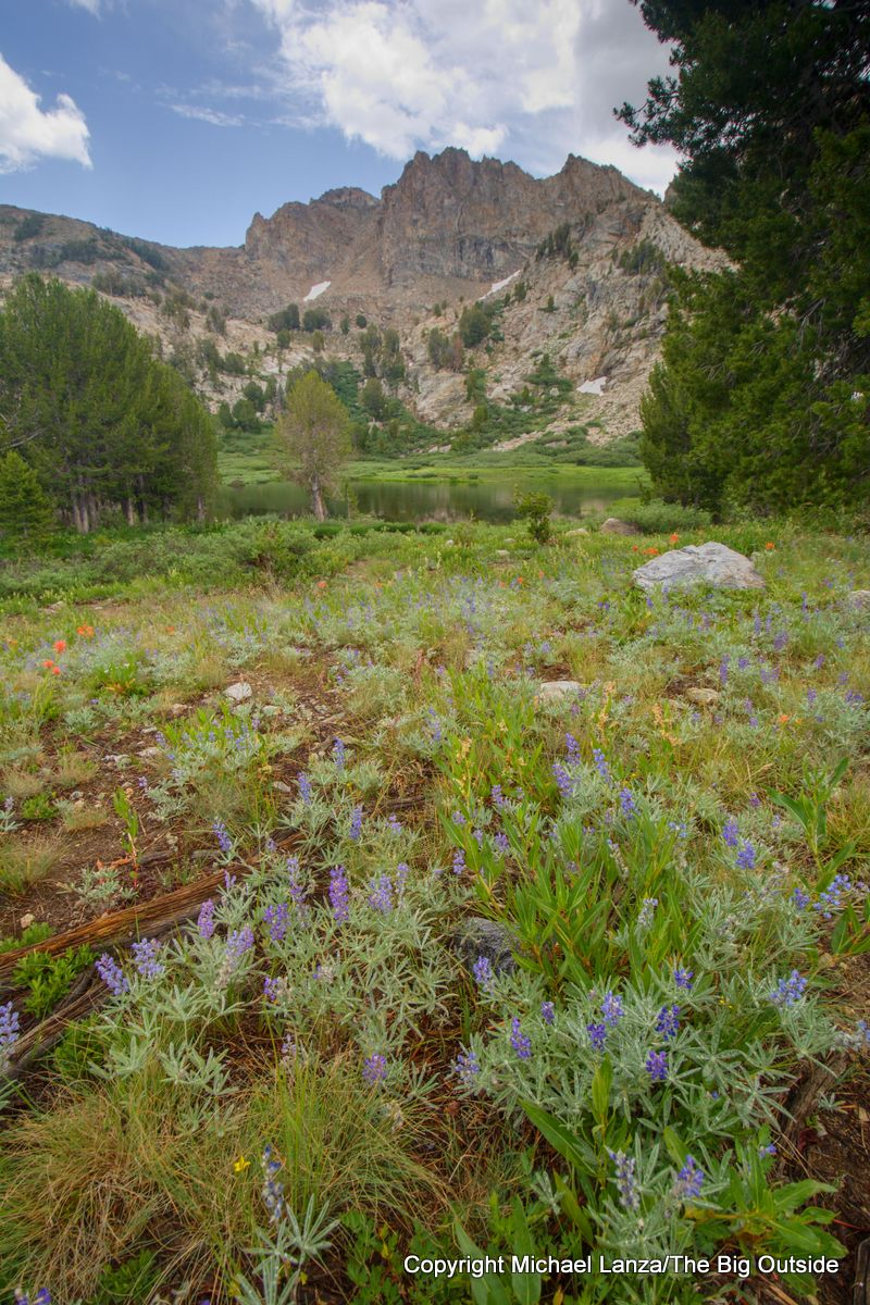 Wildflowers in Lamoille Canyon on the Ruby Crest Trail, Ruby Mountains, Nevada.