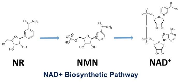 NAD biosynthetic pathway