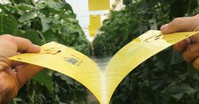 Biobest's improved sticky traps prove attractive