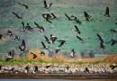 Global analysis of Wikipedia  reveals biodiversity secrets