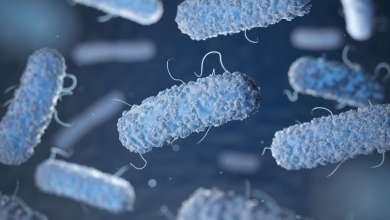 drug-tolerant bacteria