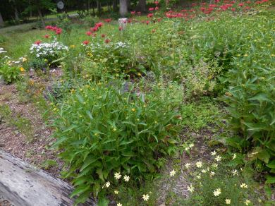 Driveway bed, July 2 2014