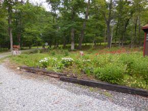 Bog garden, July 2014
